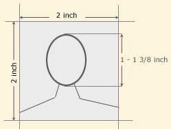 Head Measurement (Inches)