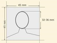Head Measurement (Millimeters)